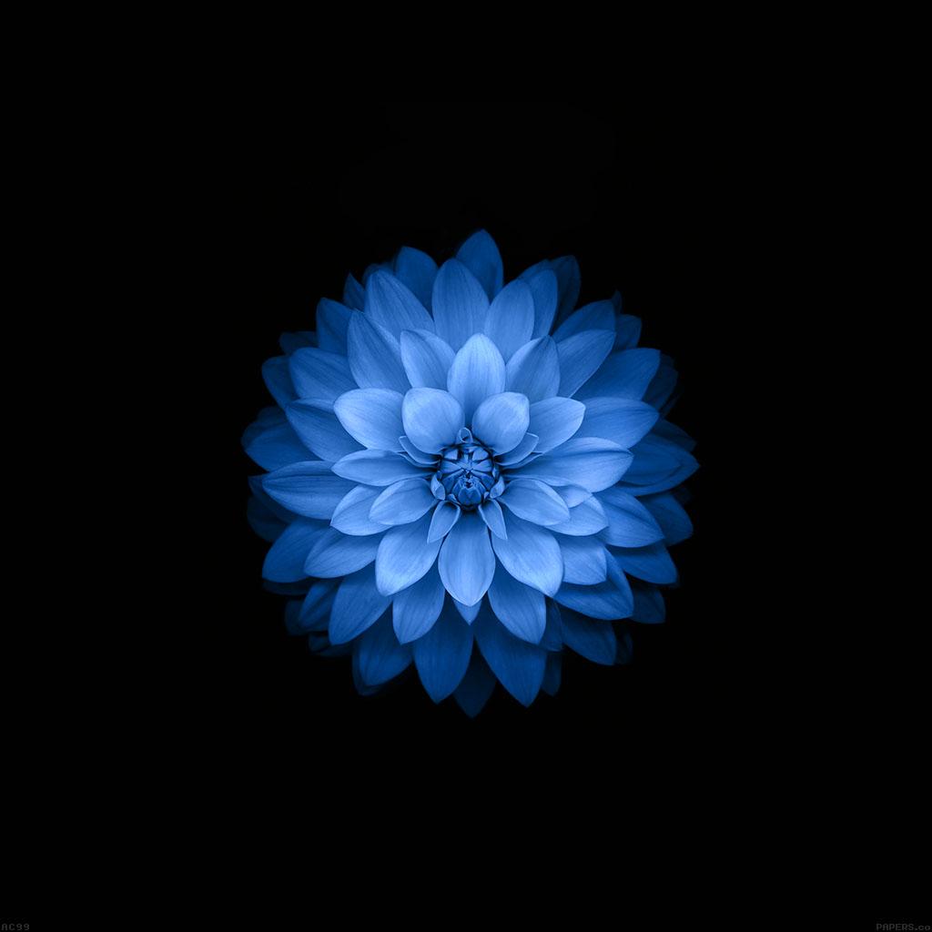 wallpaper-ac99-wallpaper-apple-blue-lotus-iphone6-plus-ios8-flower-wallpaper