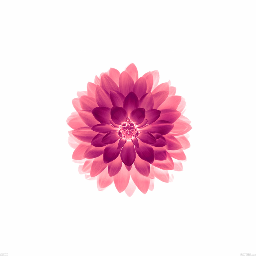 Ad77-apple-red-on-white-lotus-iphone6-plus