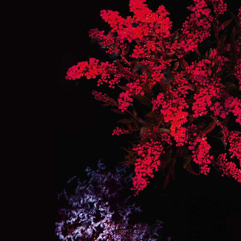 wallpaper-an59-apple-red-flower-dark-ios9-iphone6s-wallpaper