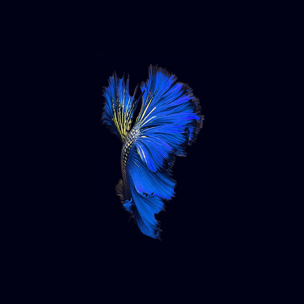 wallpaper-an82-apple-ios9-fish-live-background-dark-blue-wallpaper
