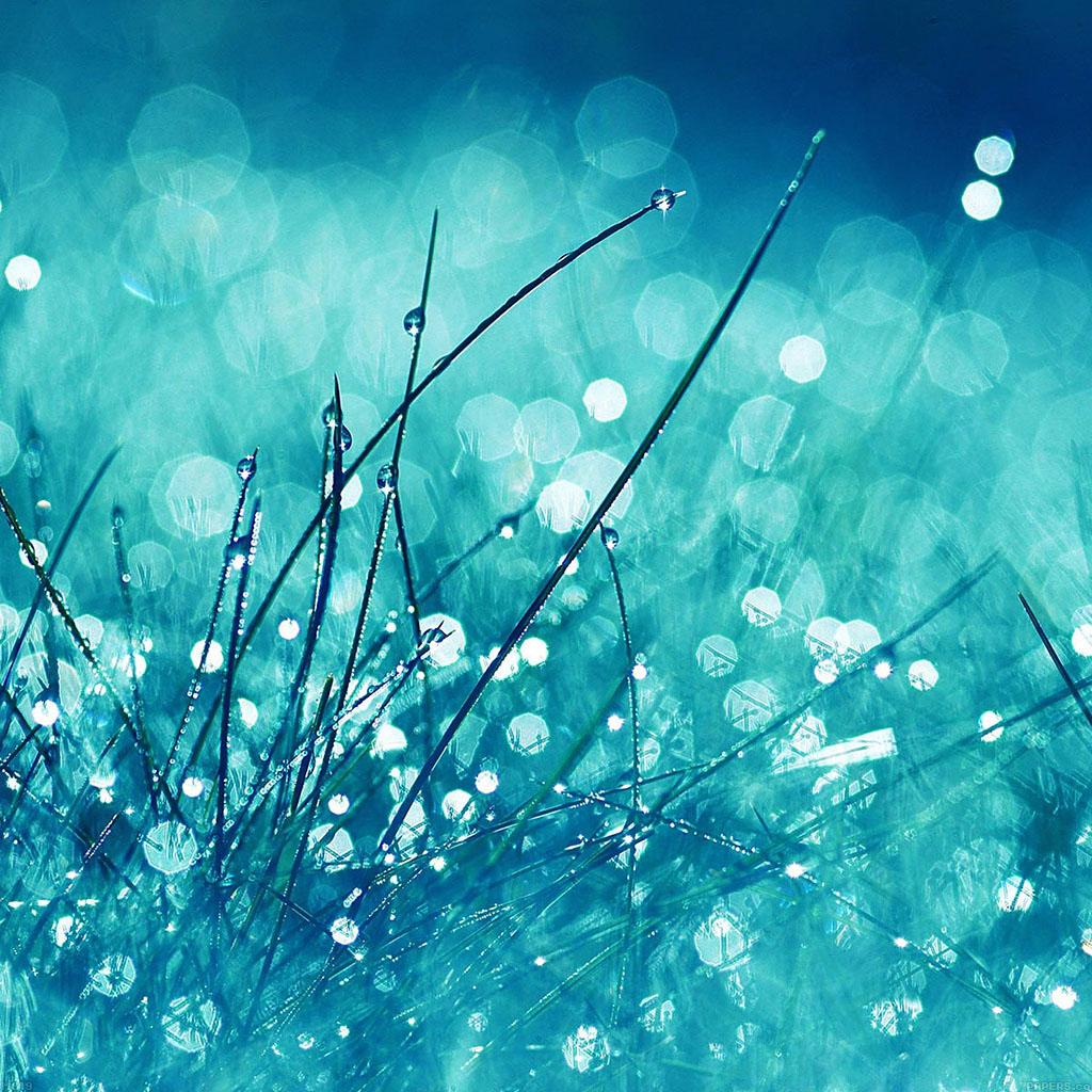 wallpaper-ma19-grass-dew-flower-nature-wallpaper