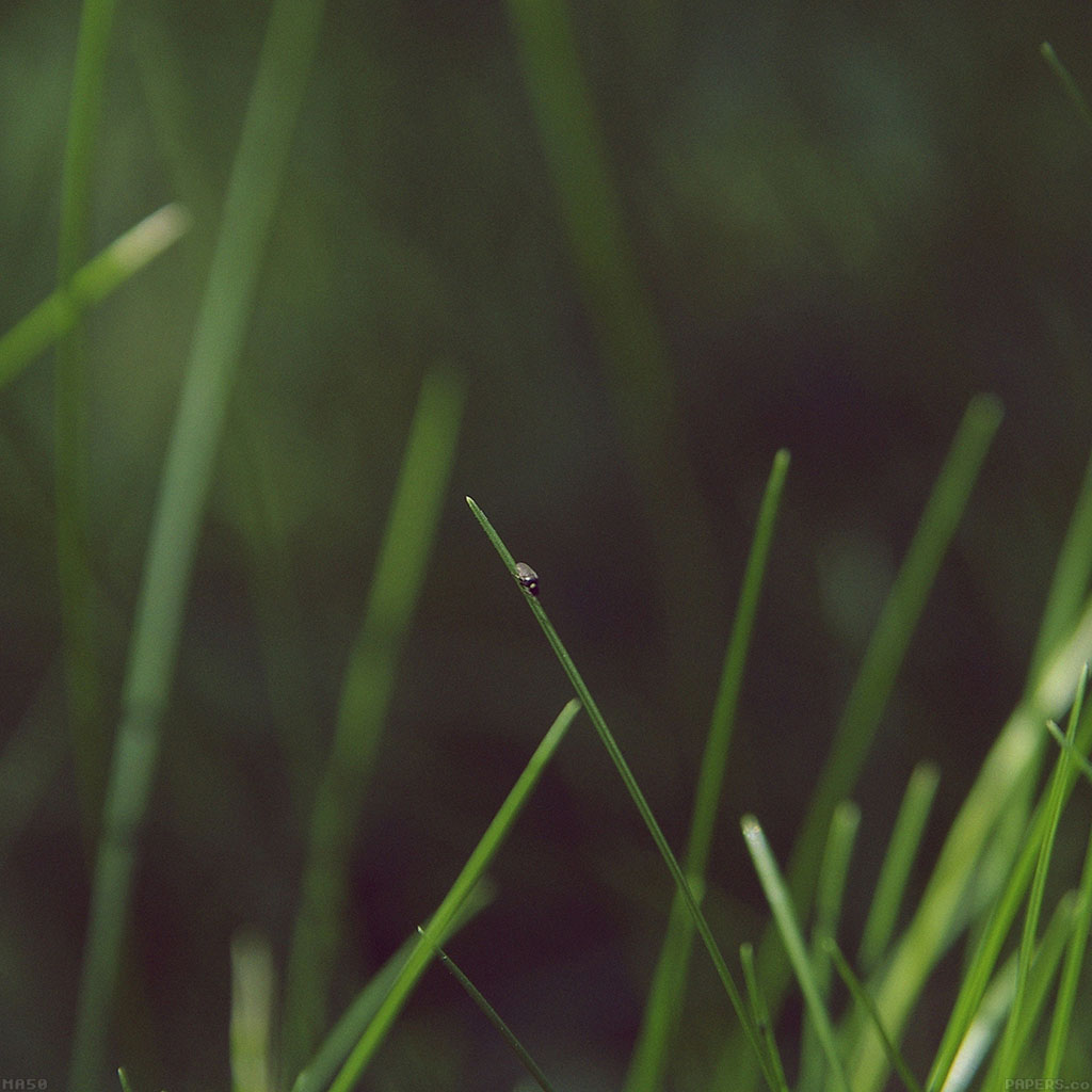 wallpaper-ma50-grassy-leaf-flower-nature-wallpaper