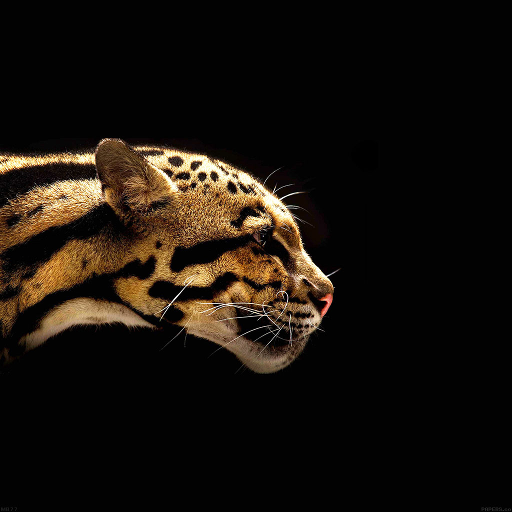 wallpaper-mb77-wallpaper-wild-cat-b-animal-wallpaper