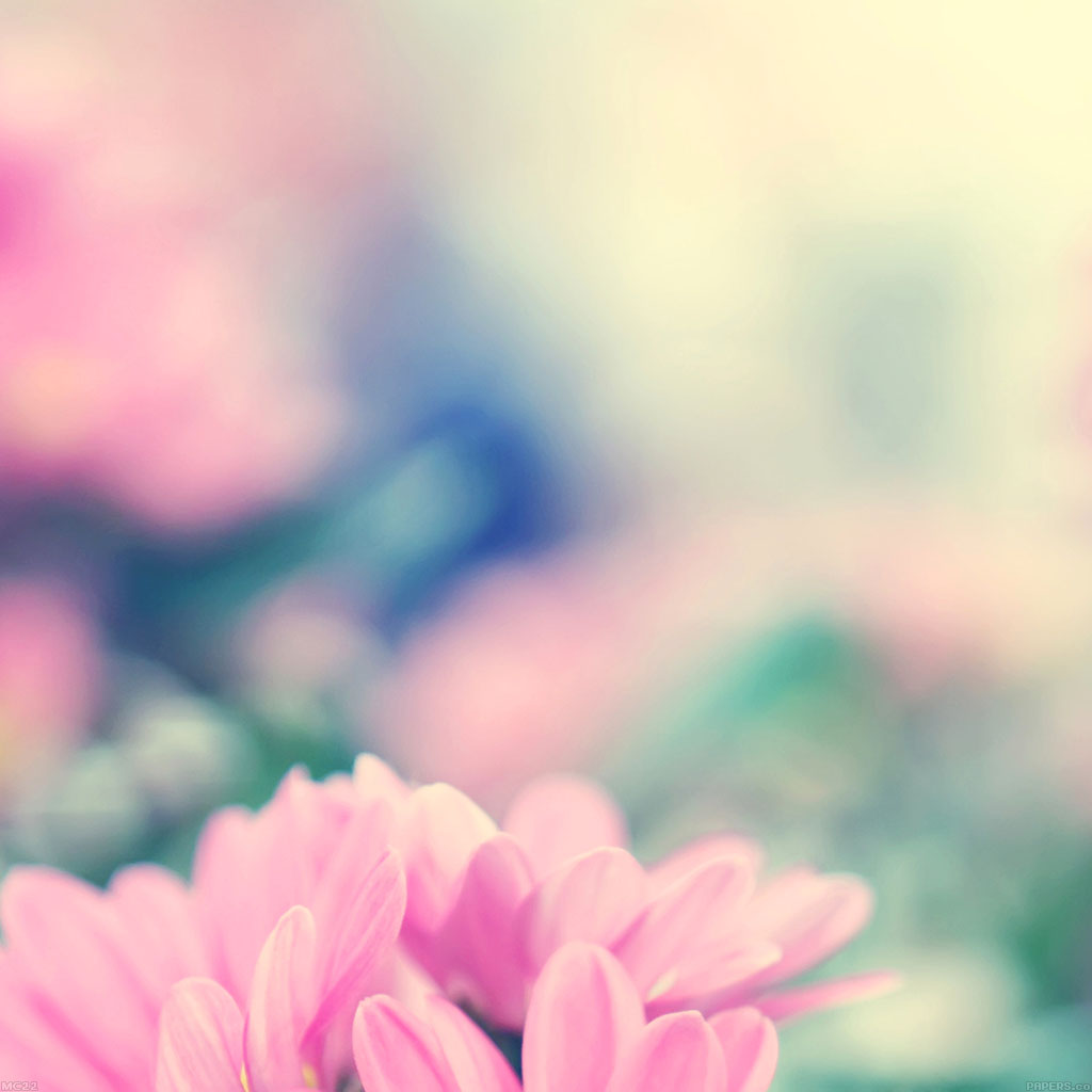 wallpaper-mc22-wallpaper-boo-184-flower-pink-blurred-wallpaper