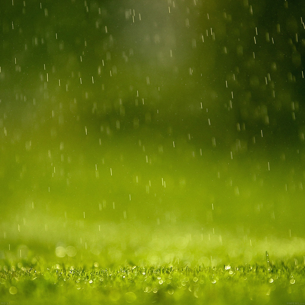 wallpaper-md37-wallpaper-green-rain-nature-wallpaper