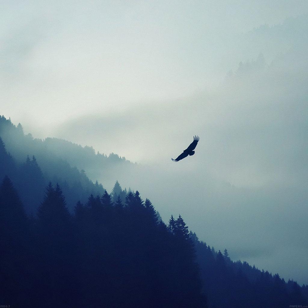 wallpaper-md67-eagle-mountain-fly-animal-wallpaper