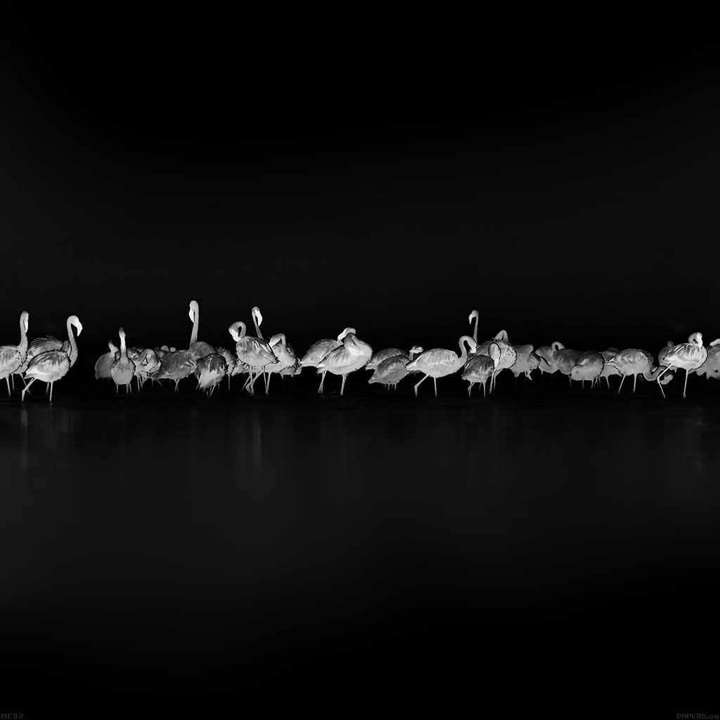 wallpaper-me82-flamingos-black-peace-animal-nature-birds-wallpaper