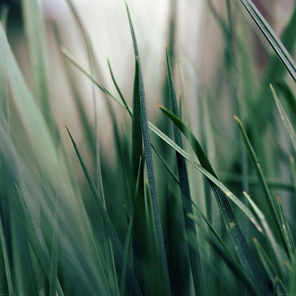 wallpaper-mf52-grass-world-garden-leaf-nature-wallpaper