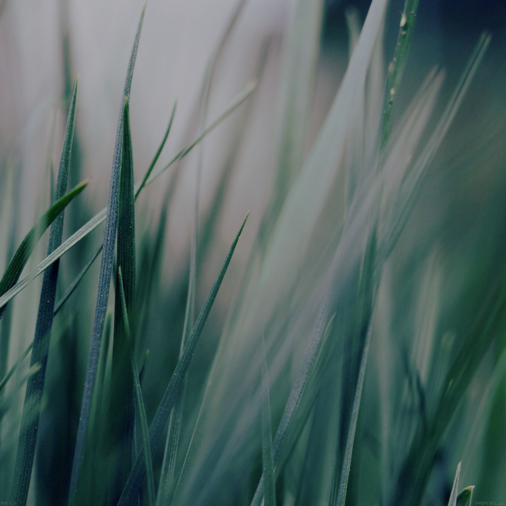 wallpaper-mf53-grass-green-world-garden-leaf-nature-wallpaper
