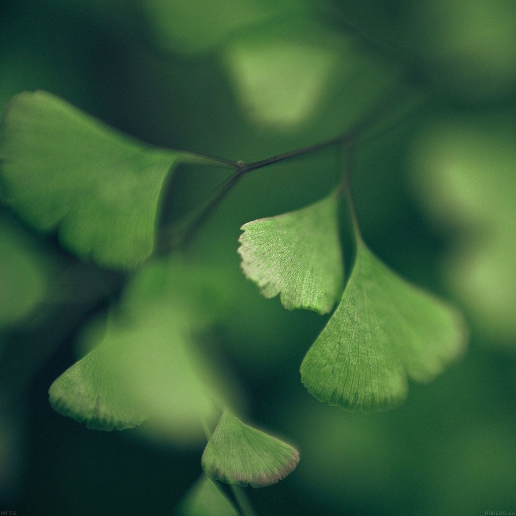 wallpaper-mf56-good-luck-clovers-leaf-nature-wallpaper