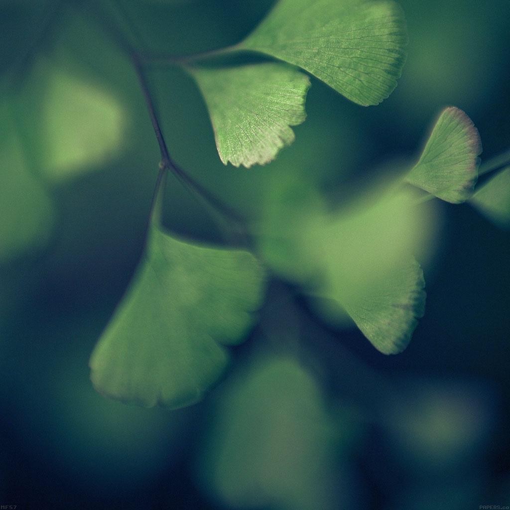 wallpaper-mf57-good-luck-blue-clovers-leaf-nature-wallpaper