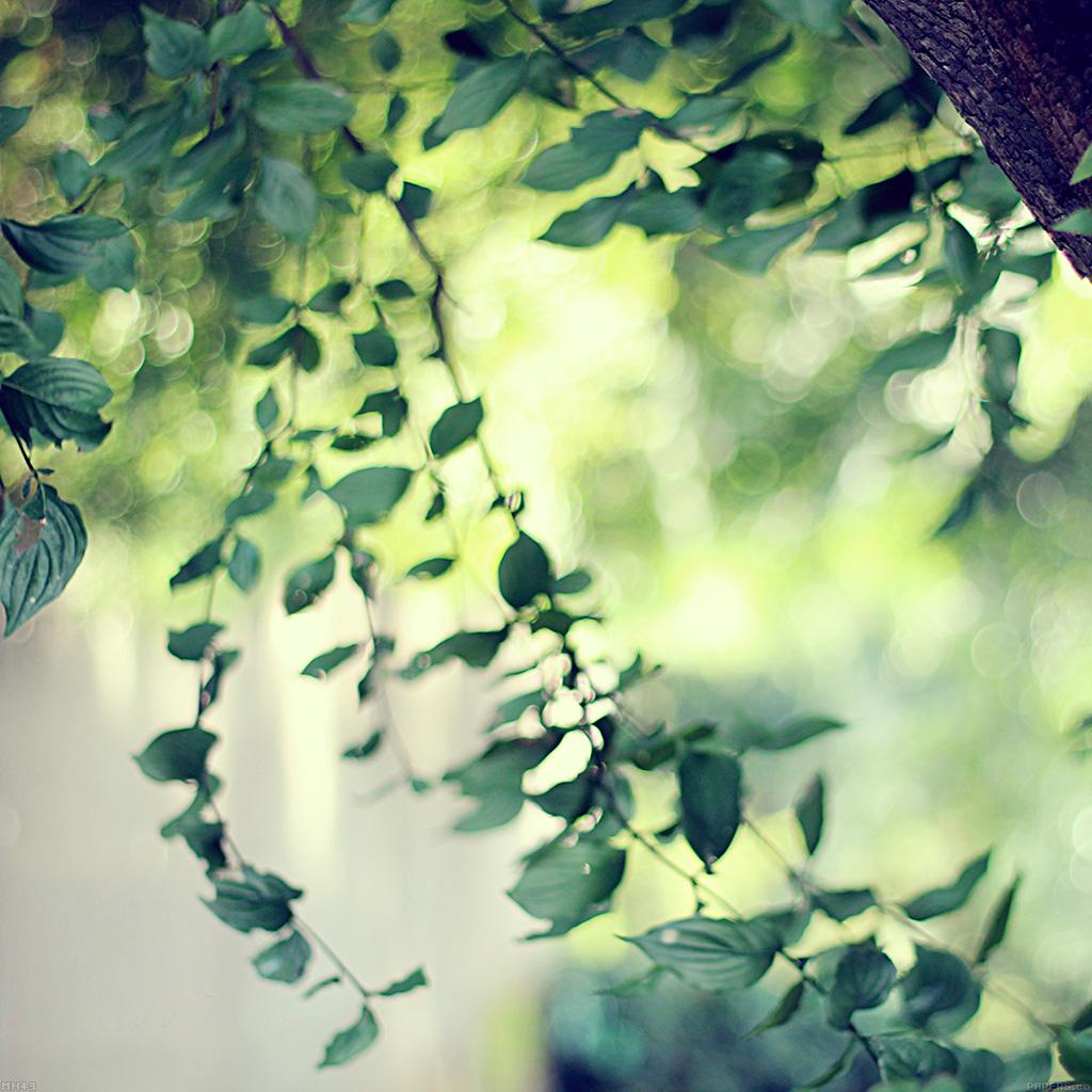 wallpaper-mh43-tree-bokeh-calm-morning-nature-park-wallpaper