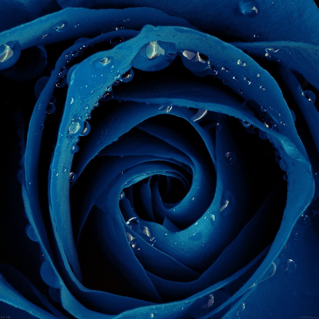 Wallpaper Mh82 Beautiful Blue Rose Flower Nature
