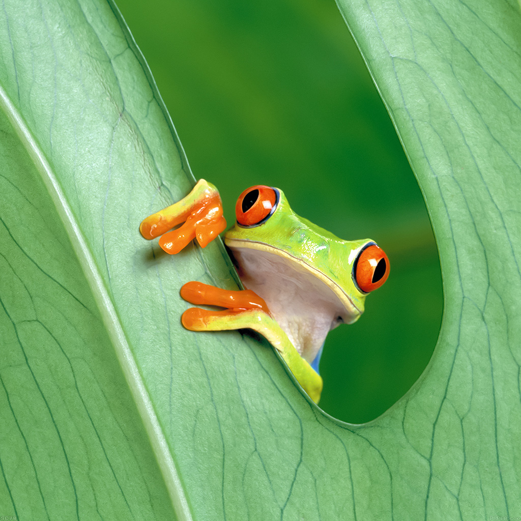 wallpaper-mh91-frog-leaf-nature-wallpaper