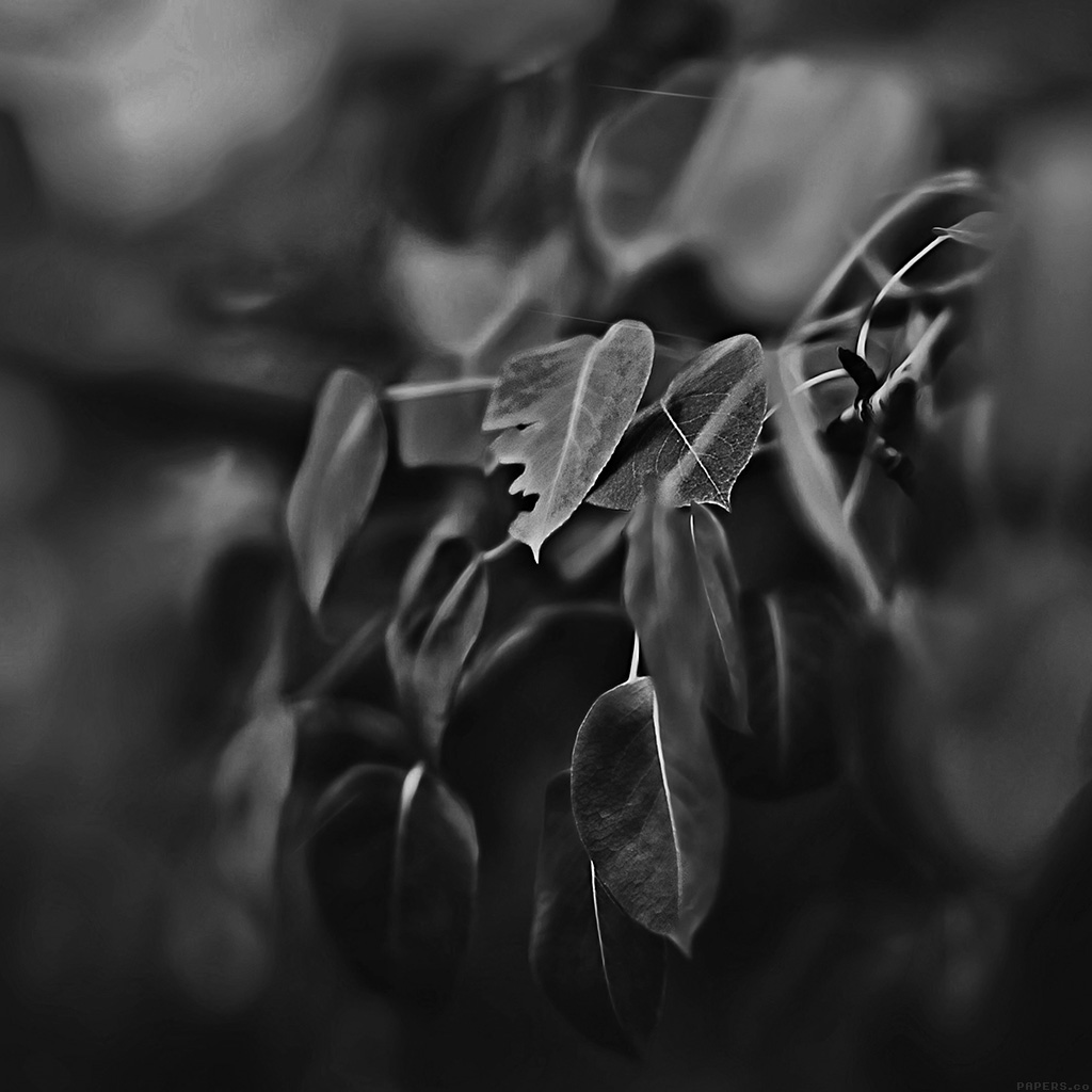 wallpaper-mk02-fall-leaf-flower-dark-bokeh-nature-wallpaper