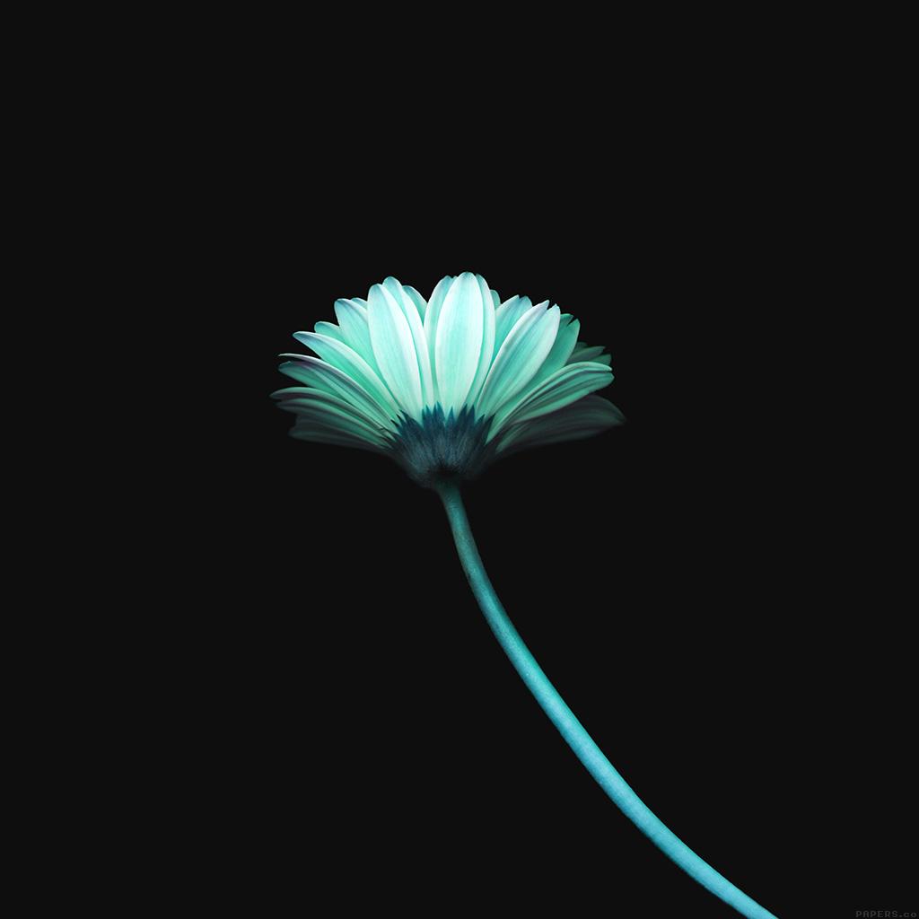 wallpaper-mk69-lonely-flower-dark-blue-simple-minimal-nature-wallpaper