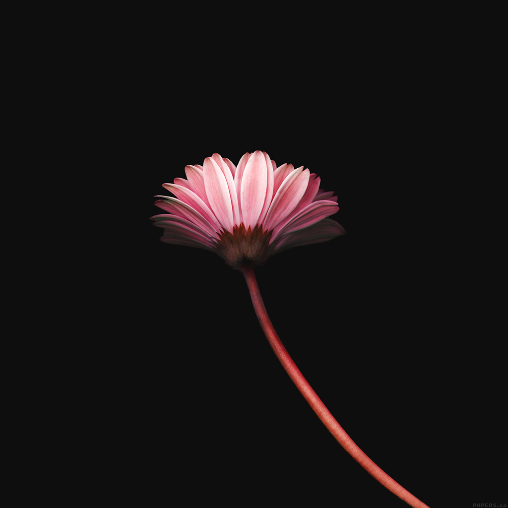wallpaper-mk70-lonely-flower-dark-red-simple-minimal-nature-wallpaper