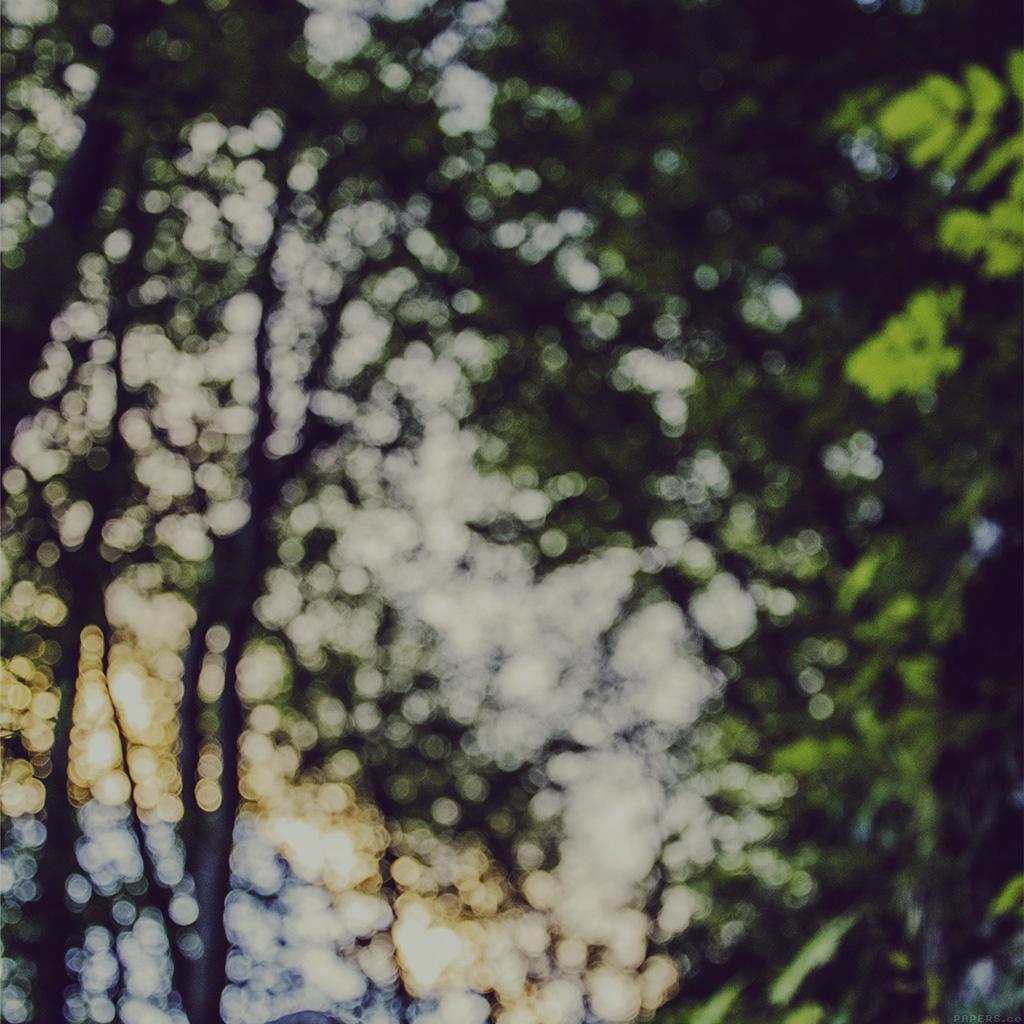 wallpaper-mm88-bokeh-forest-tree-sky-nature-wallpaper