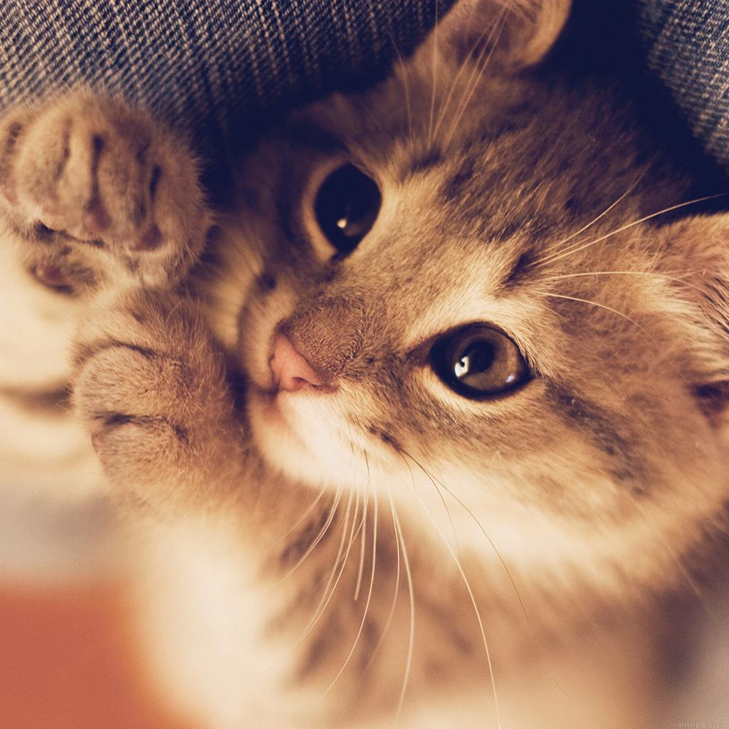 i love papers | mq77-cute-cat-kitten-nature-animal