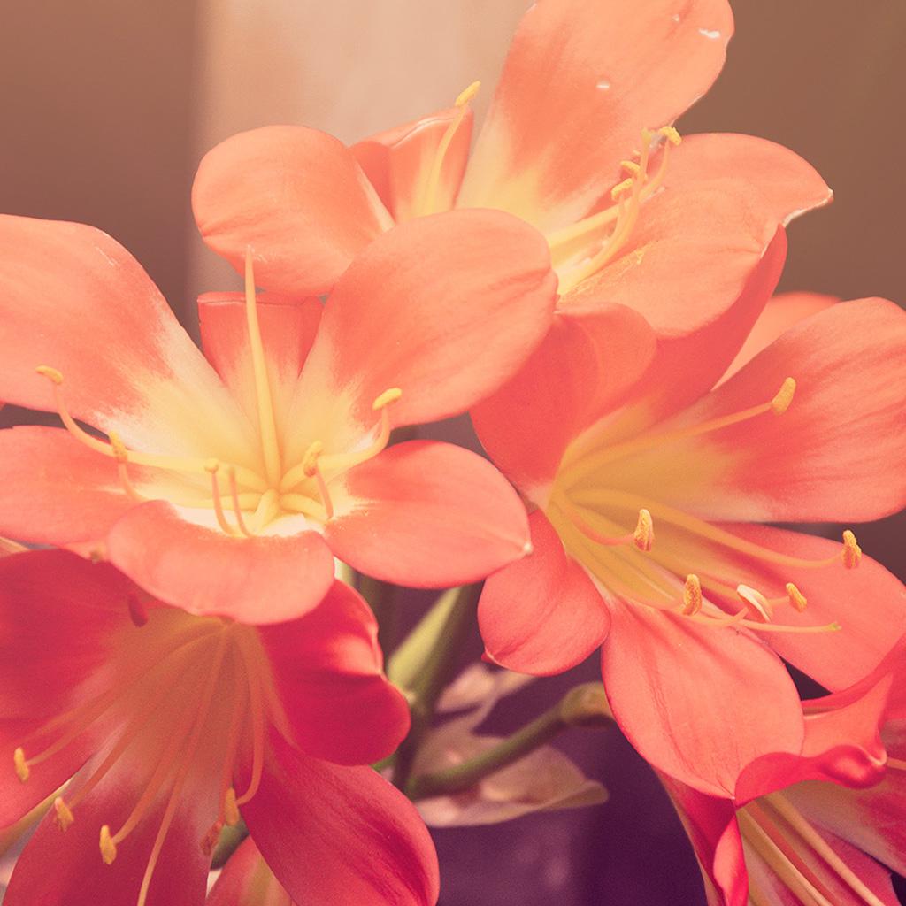 wallpaper-mt84-flower-red-nature-yellow-blossom-wallpaper