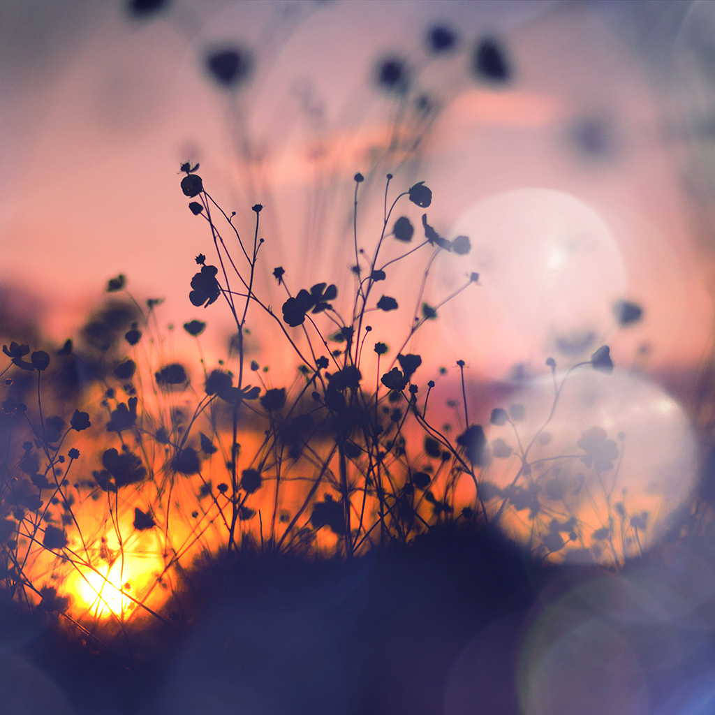 Androidpapers.co | Android wallpaper | mv66-night-nature-flower ...