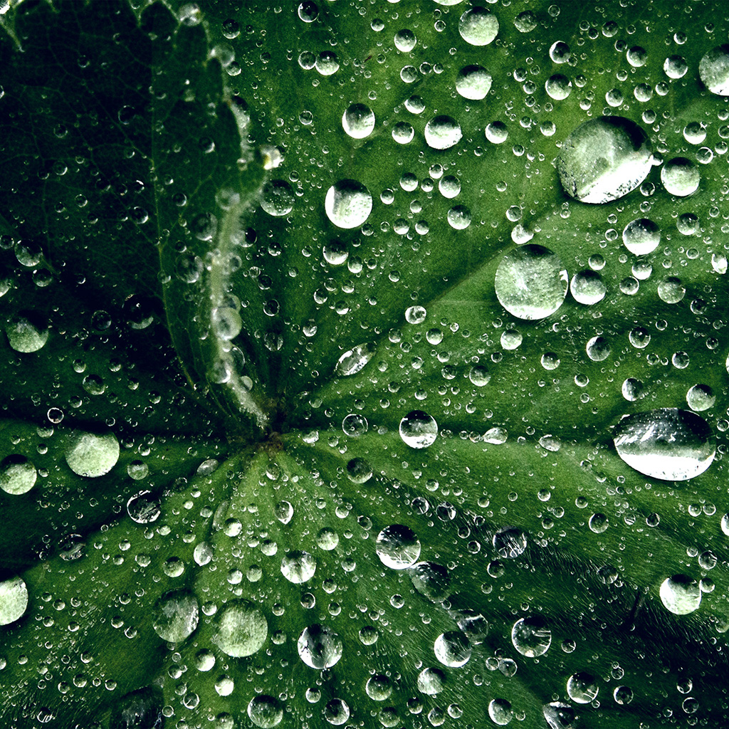 wallpaper-my46-water-drop-on-leaf-summer-green-live