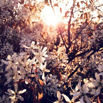 papers.co-na29-tree-flower-blossom-spring-nature-6-wallpaper