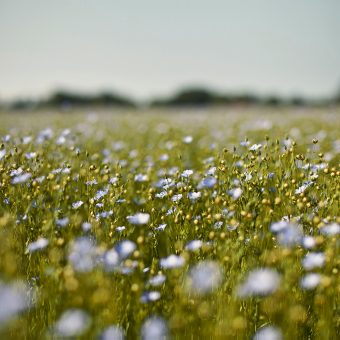 papers.co-nb02-field-blue-cosmos-flower-spring-nature-beautiful-6-wallpaper