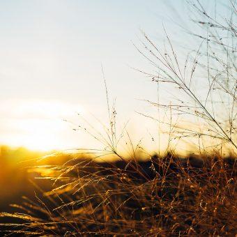 Bushes in the Sun