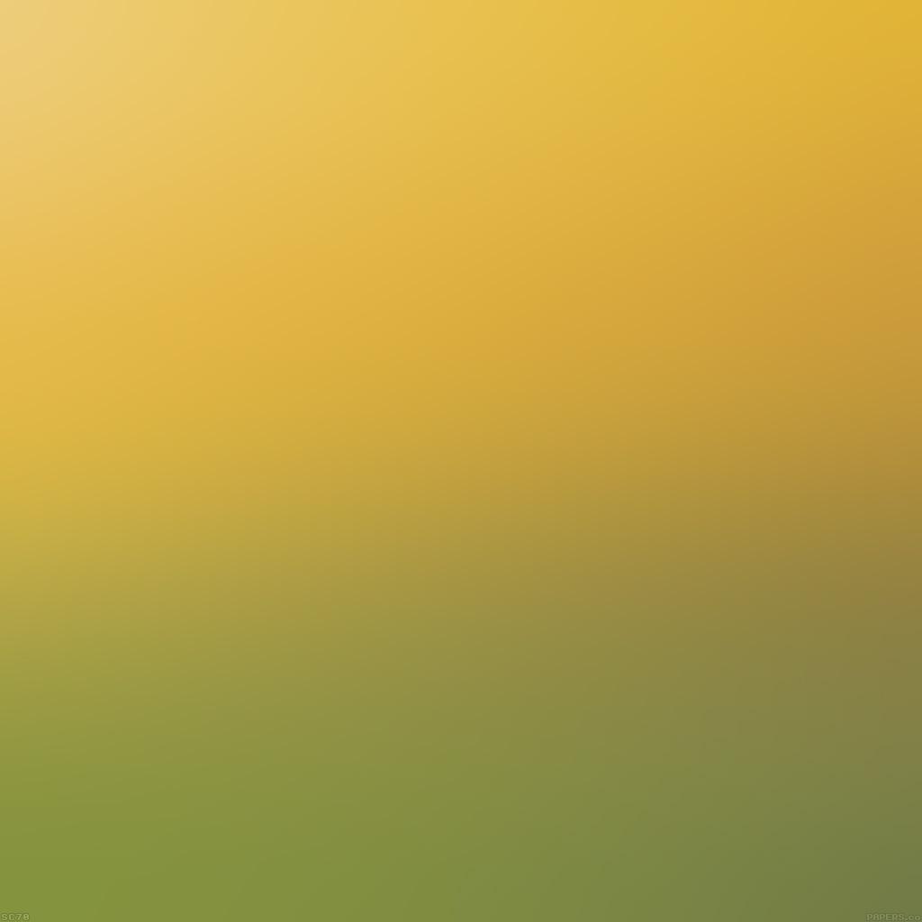 wallpaper-sc87-backyard-beauty-day-blur-wallpaper