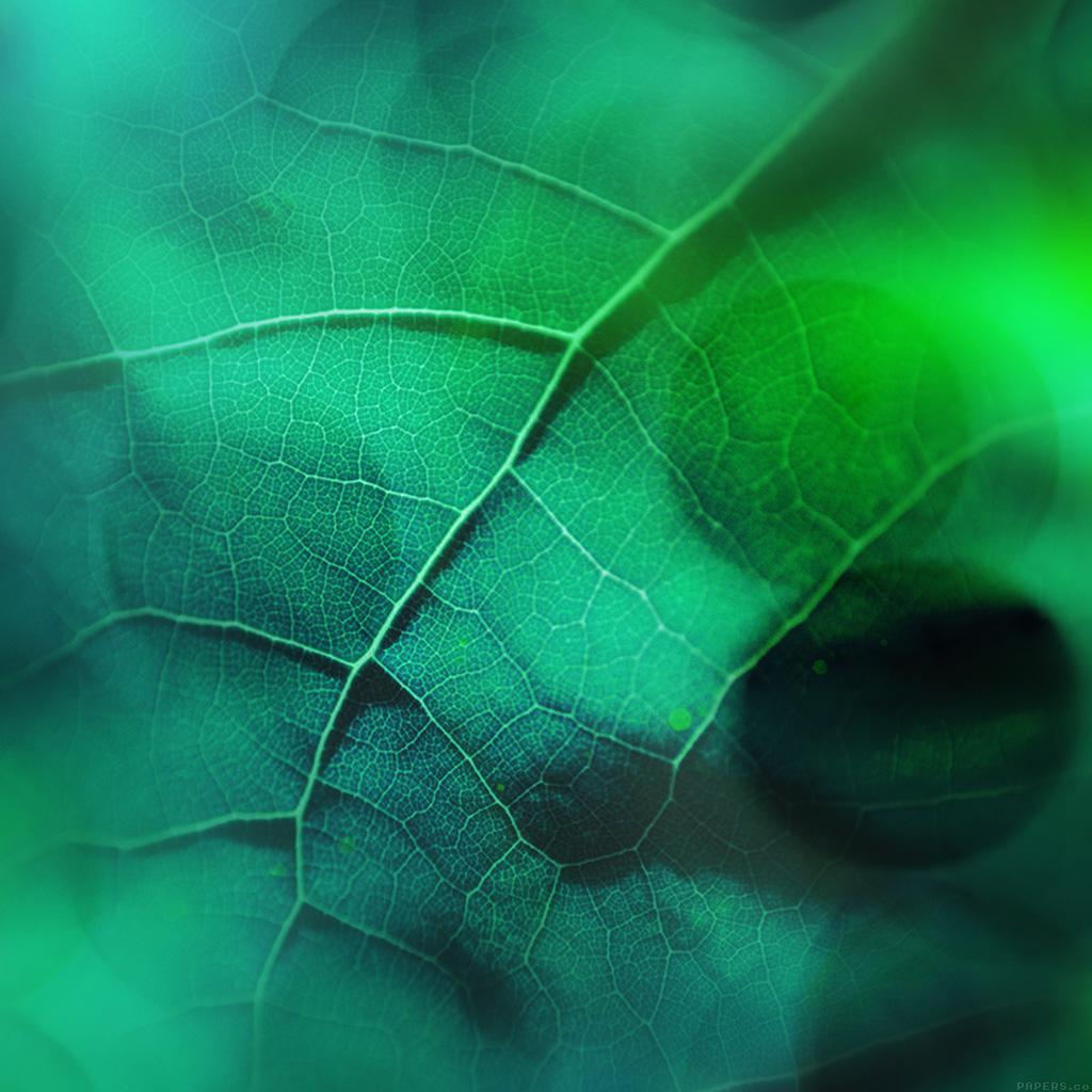 wallpaper-vg59-leaf-flare-nature-green-wood-love-pattern-wallpaper