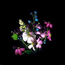 ad16-wallpaper-apple-ios8-iphone6-dark-flower