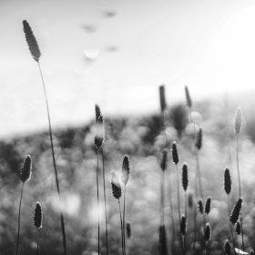 np01-dream-flower-morning-nature-fog-flare-bw-dark