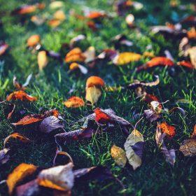 mt27-fall-leaf-nature-green-backyard-blue-dark