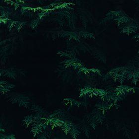 vs89-tree-leaf-green-pattern-nature-dark