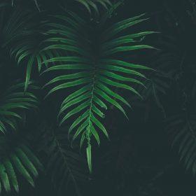 nw44-leaf-tree-dark-nature