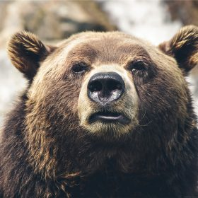 mp73-bear-face-what-the-hell-nature-animal
