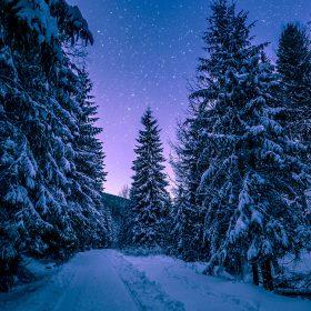 nx97-snow-winter-wood-tree-road-night-nature