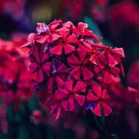 nc58-nature-flower-red-blossom-beautiful-spring