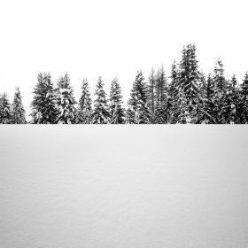 oa63-snow-tree-winter-white-nature