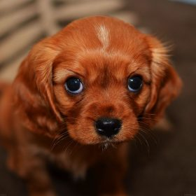 mg62-cute-puppy-wallpaper