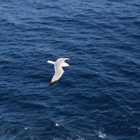 mt15-seagull-bird-sea-ocean-animal-nature